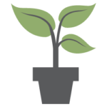 image of RHN potted plant